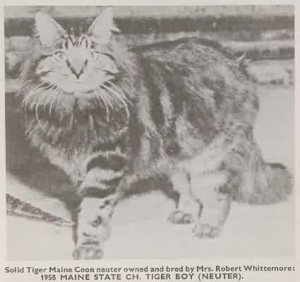 Tiger Boy(1958)