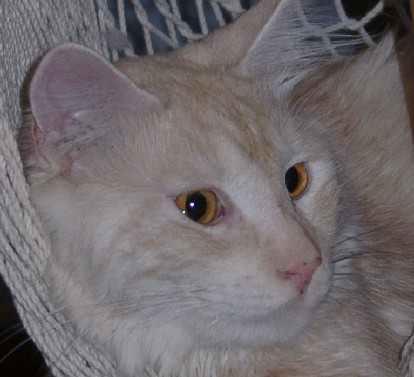 Steen, relaxed in de hangmat